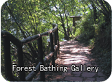 Forest bathing gallery